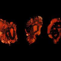 Deathspell Omega - Kénôse [Digi-CD]